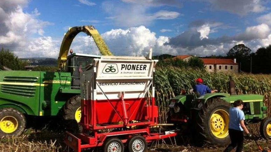 Irmáns Picaño organiza unas jornadas sobre mejoras en la producción de maíz
