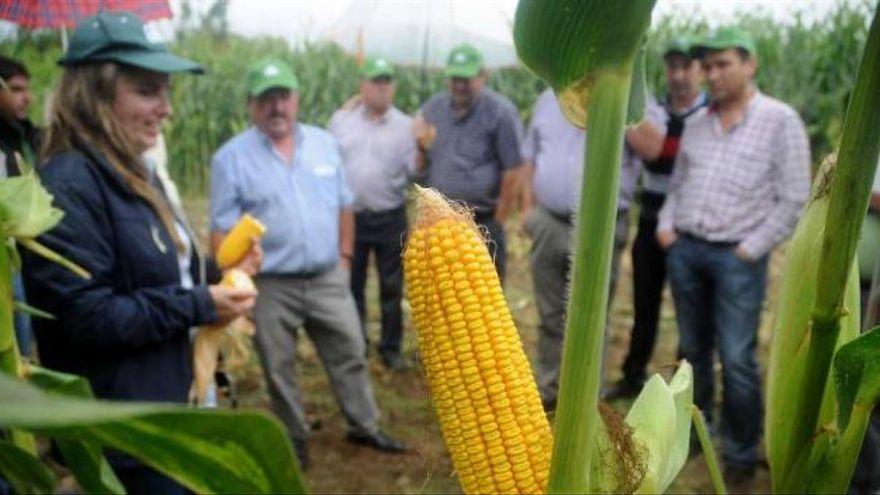 Irmáns Picaño presenta en Cora la primera semilla de pradera de la firma Pioneer